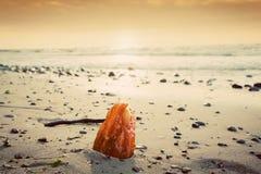 Bernsteinfarbiger Stein auf dem Strand somethere nahe Tallinn, Estland Stockfoto
