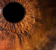 Bernsteinfarbiges Augenmakro lizenzfreies stockfoto
