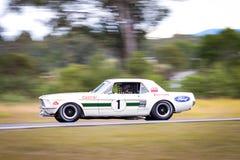 Beroemd Australisch Mustang stock fotografie