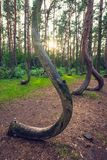 Beroemd Bochtig Bos stock afbeeldingen