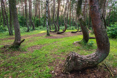 Beroemd Bochtig Bos stock fotografie