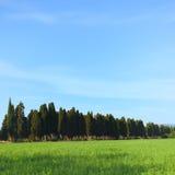 Beroemd de cipreslandschap van Bolgheri. Toscanië, Italië Stock Fotografie