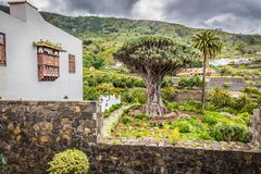 Beroemd Dragon Tree Drago Milenario in Icod de los Vinos Tenerife stock foto's
