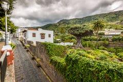 Beroemd Dragon Tree Drago Milenario in Icod de los Vinos Tenerife stock afbeelding