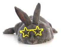 Beroemd konijntje stock foto