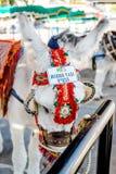 Beroemde ezelstaxi Stock Afbeelding