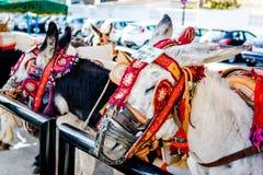 Beroemde ezelstaxi Stock Foto
