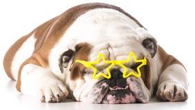 Beroemde hond Royalty-vrije Stock Foto