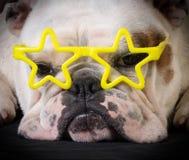 Beroemde hond Royalty-vrije Stock Afbeelding