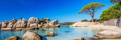 Beroemde Pijnboomboom met lagune op Palombaggia-strand, Corsica, Frankrijk, Europa Royalty-vrije Stock Fotografie
