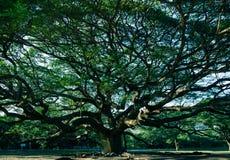 Beroemde Regenboom met donker licht royalty-vrije stock afbeeldingen