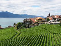 Beroemde wijngaarden in gebied Lavaux Stock Foto