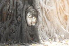 Beroemde zandsteen het ayutthaya-Stijl hoofd van beeld i van Boedha Royalty-vrije Stock Afbeelding