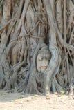 Beroemde zandsteen het ayutthaya-Stijl hoofd van beeld i van Boedha stock afbeeldingen
