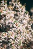 ?berraschende Sommerblume im Makrofoto der sch?nen Gartennahaufnahme lizenzfreie stockbilder