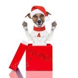 Überraschungsweihnachtshund in einem Kasten Lizenzfreies Stockfoto