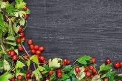 Berri do espinho na tabela de madeira preta Imagens de Stock Royalty Free