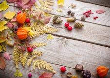 Berriaes e foglie di autunno rossi su fondo di legno Immagini Stock
