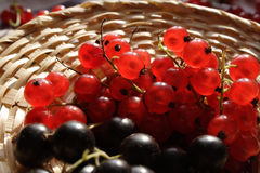 Berries. Of a black and red currant Stock Photography