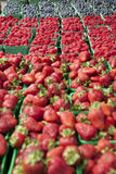Berries. All kind of fresh berries in the market Stock Photography