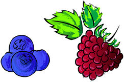 Berries. Illustrations of berries, head draw of berries vector illustration
