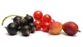 Berries. Stock Photos