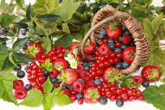 Berries. Strawberries, red currants, raspberries and blueberries on white falling out of a basket stock image
