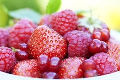 Berries. Closeup of fresh ripe berries Royalty Free Stock Images