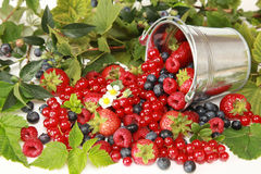 Berries. Strawberries, red currants, raspberries and blueberries on white falling out of a bucket stock images