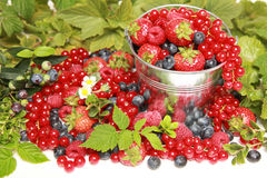 Berries. Strawberries, red currants, raspberries and blueberries on white falling out of a bucket stock image