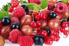 Berries Royalty Free Stock Photo