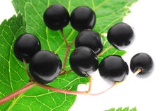 Berries. Close up of black berries Stock Photography