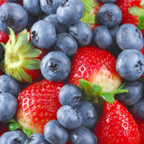Berries Stock Photography
