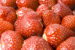 Berries. Background of fresh sweet strawberries Stock Image