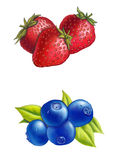 Berries. Strawberries and blueberries on white background. Digital illustration Stock Image