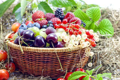 Berries And Fruits Assortment Royalty Free Stock Photo