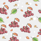 Berries and autumn leaves of Viburnum Royalty Free Stock Photography