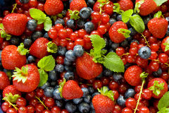 Berries background Stock Photos