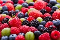 Berries Background macro, selective focus. Royalty Free Stock Photo