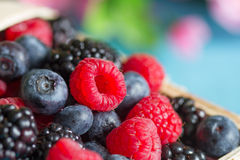 Berries background with raspberries, blueberries and blackberries Royalty Free Stock Images