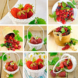 Berries on background set Stock Photos