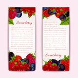 Berries banners vertical. Natural organic forest healthy berries banners vertical set vector illustration Stock Images