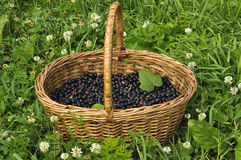 Berries in a basket Stock Photo