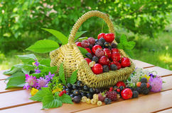 Berries in basket. Fresh berries and cherries from garden in a basket Royalty Free Stock Image