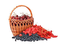 Berries and the basket. Cherries in the basket, blueberry, raspberry and red currant are isolated over white Stock Image
