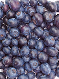 Berries of a bilberry Stock Image