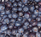 Berries of bilberry Stock Photo