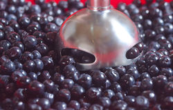 Berries of bilberry and mixer Stock Photo
