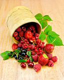 Berries in a birch tueski Royalty Free Stock Images