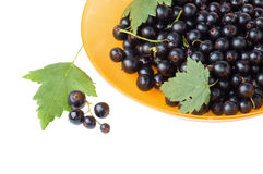 Berries of a black currant Stock Photo